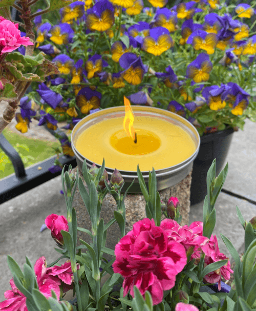 Garden Citronella Candle in a Tin Lit